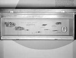 """Skulls of Eocene Mammals"" Exhibit"