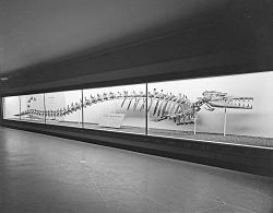 """Eocene Whale-Like Mammal"" Exhibit"