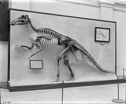Paleontology Exhibit of a Duck-billed Reptile