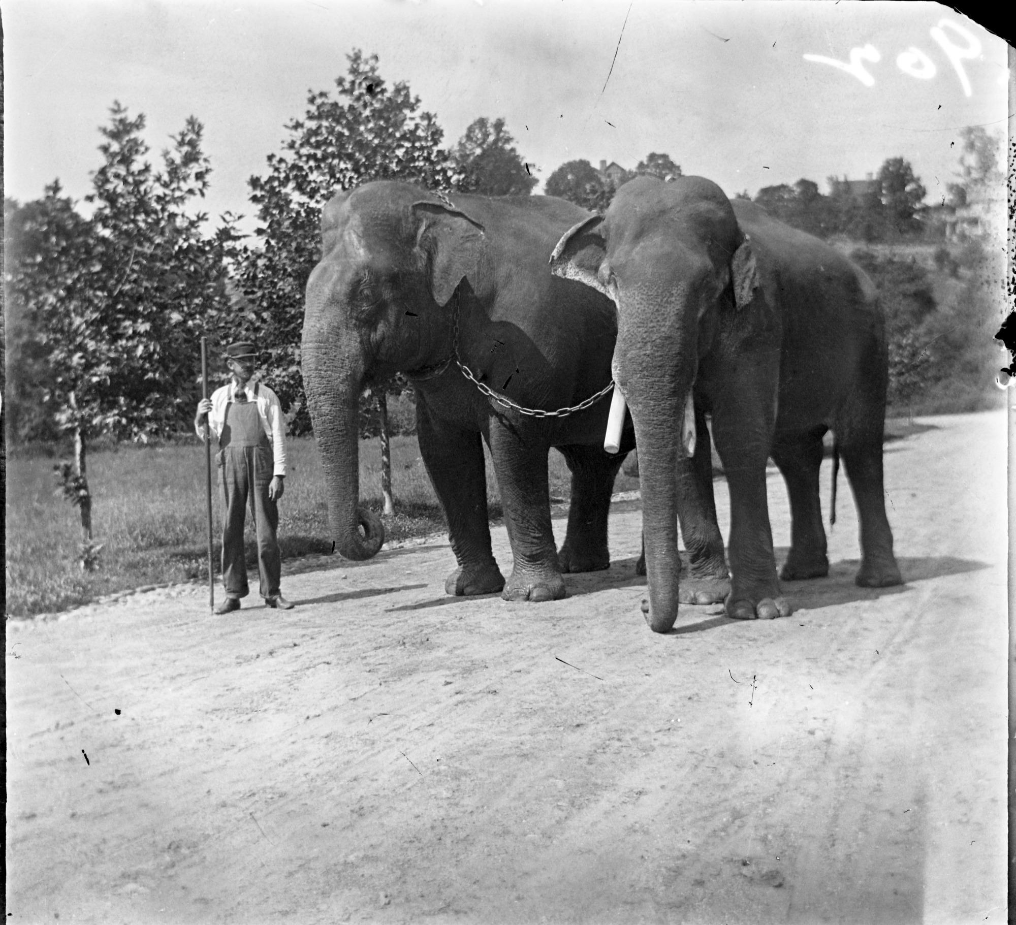"Indian Elephants ""Dunk"" and ""Gold Dust"""
