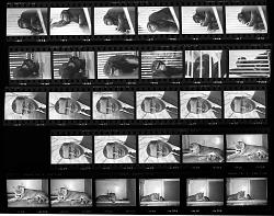 """""""Ham"""" the Chimpanzee; Dr. Theodore H. Reed; """"Princess"""" the Lioness; """"Mohini Rewa"""" the White Tiger"""
