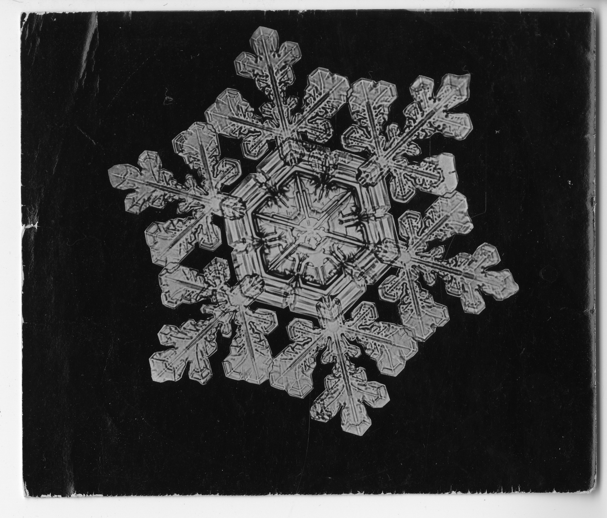 "A ""Dendrite Star"" Snowflakes Photomicrographed by Wilson A. Bentley"