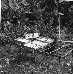 Watson M. Perrygo with Drying Bird Skins Collected on a Field Trip to Panama