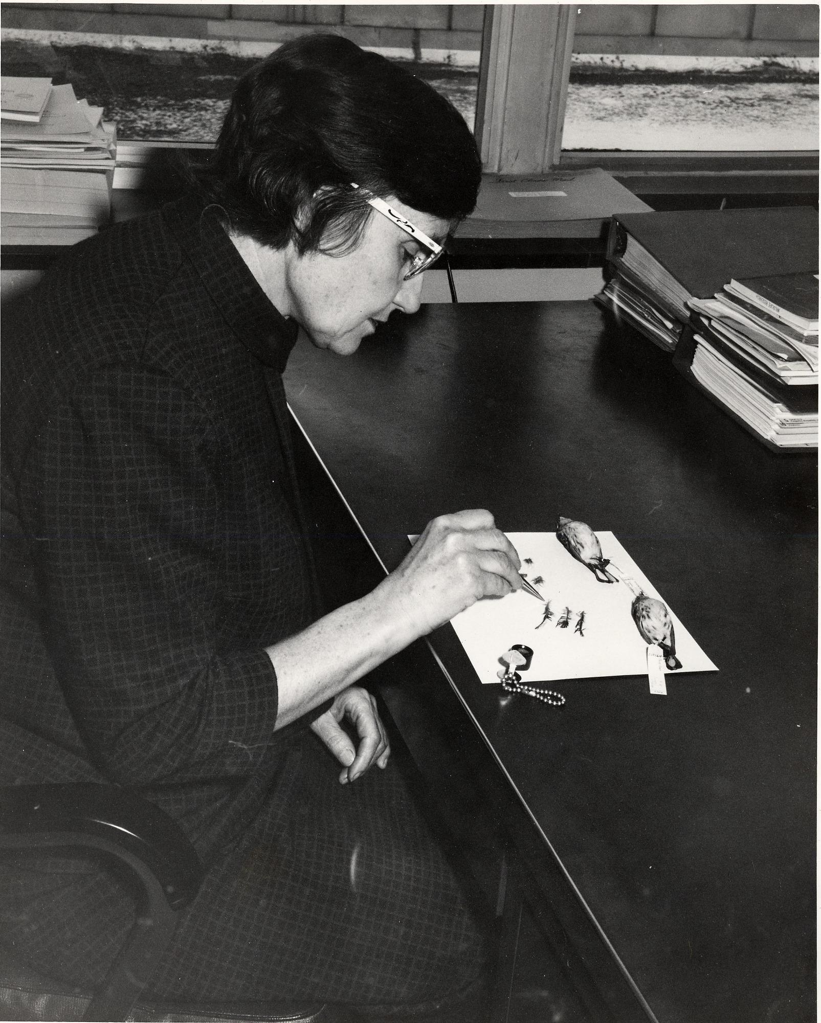 Roxie Collie S. Laybourne (1912-2003), identifying bird feathers, c. 1944