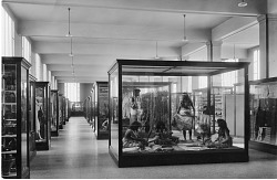 Anthropology Hall, USNM