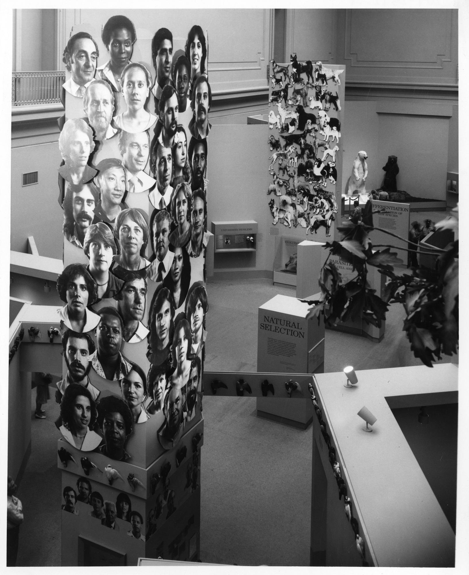 Dynamics of Evolution exhibit at NMNH, 1979