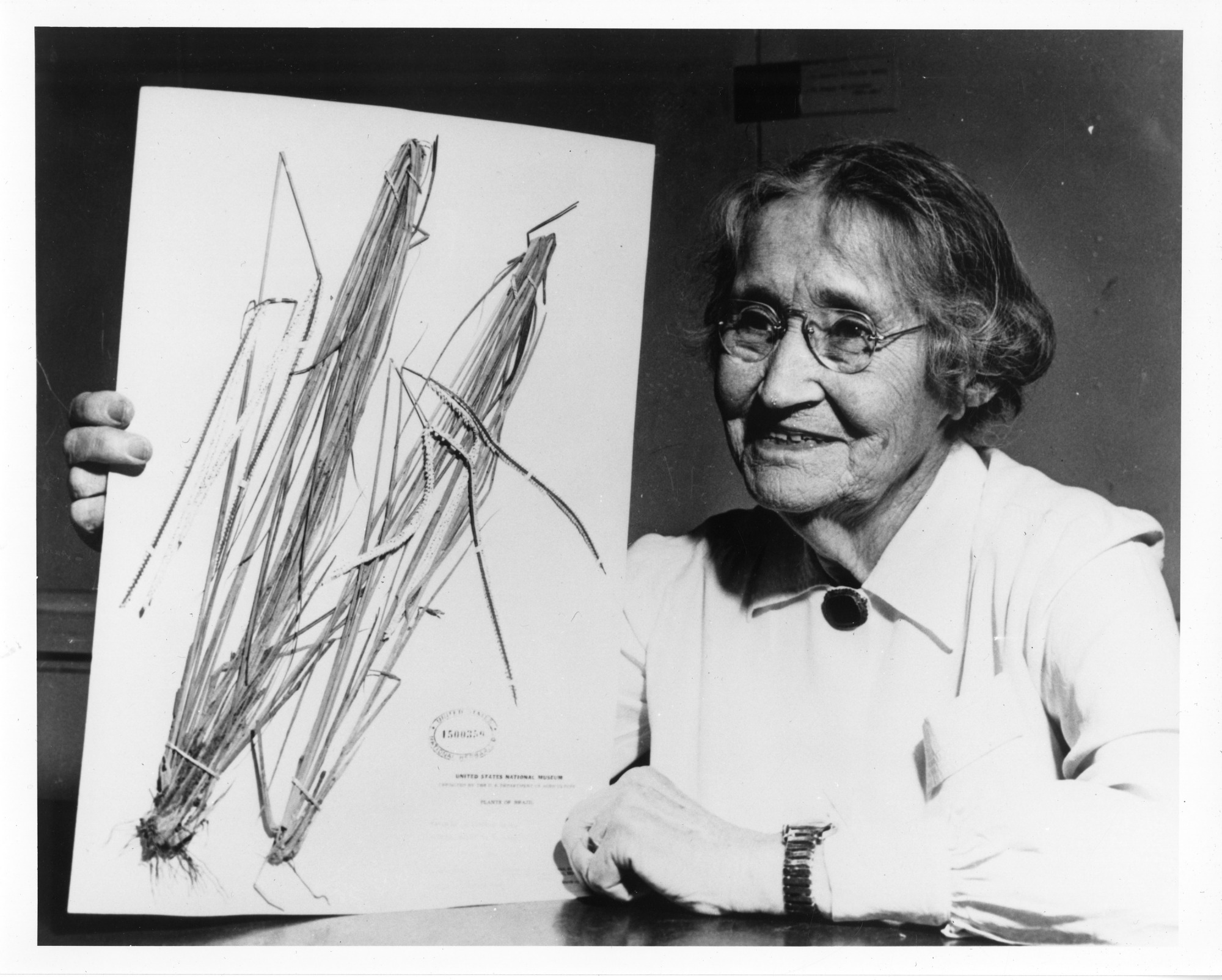 Agnes Chase, by Unknown, c. 1950, Smithsonian Archives - History Div, SIA2009-4226 and SA-1289.