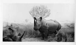 Rhinoceros Diorama