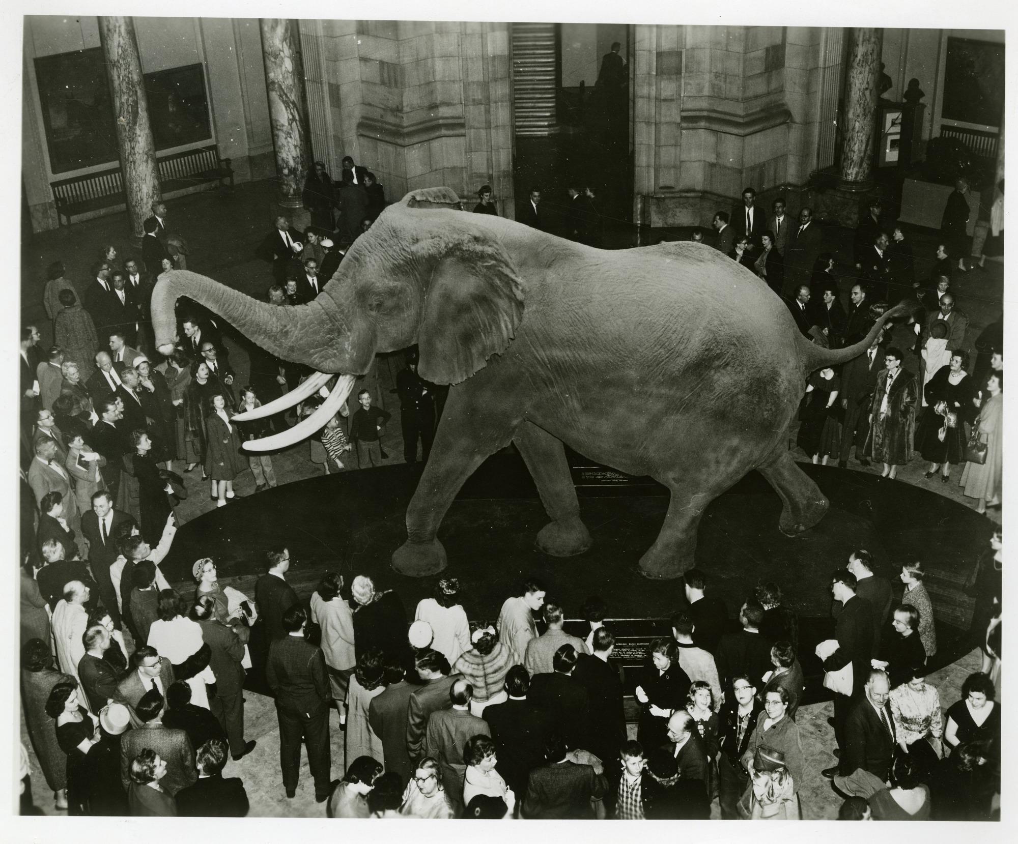 Unveiling of Fénykövi Elephant