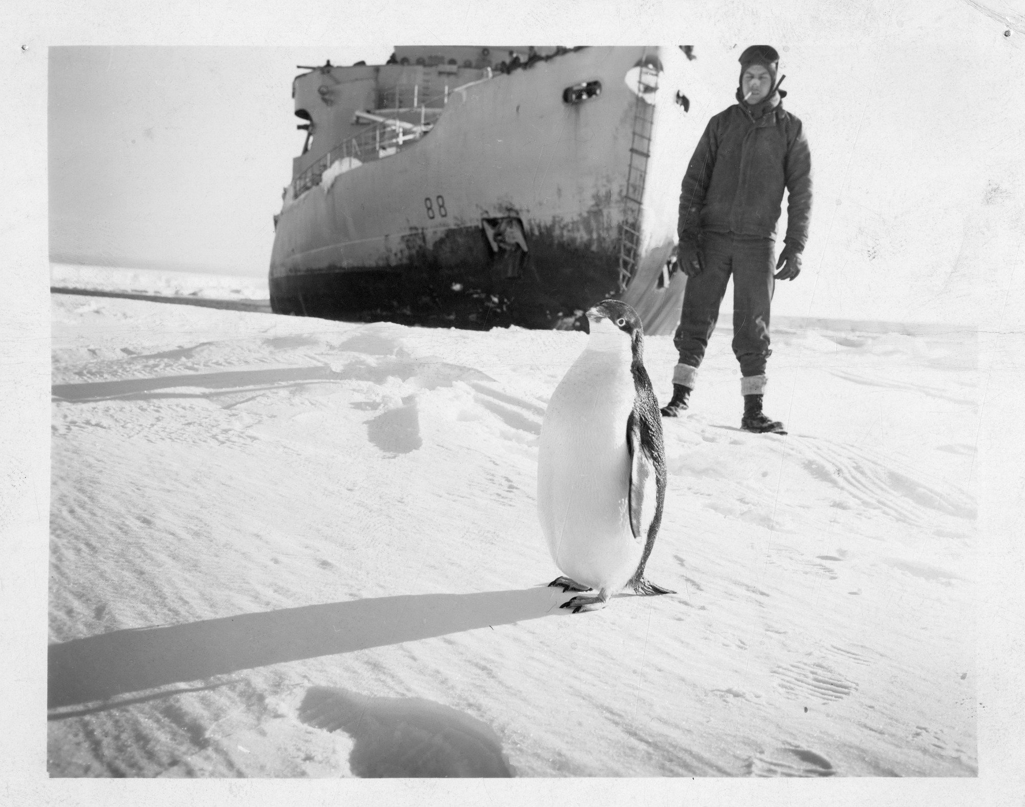Operation Windmill Expedition Member with Penguin