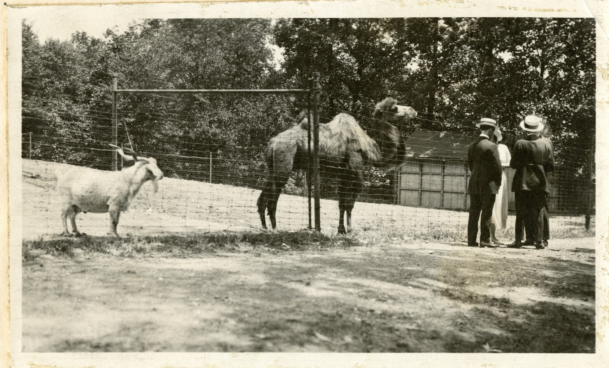 Views of the National Zoological Park in Washington, DC, showing Camel and Goat