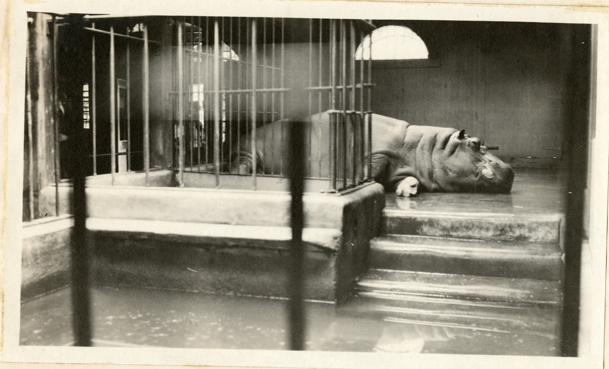 Views of the National Zoological Park in Washington, DC, showing Hippopotamus