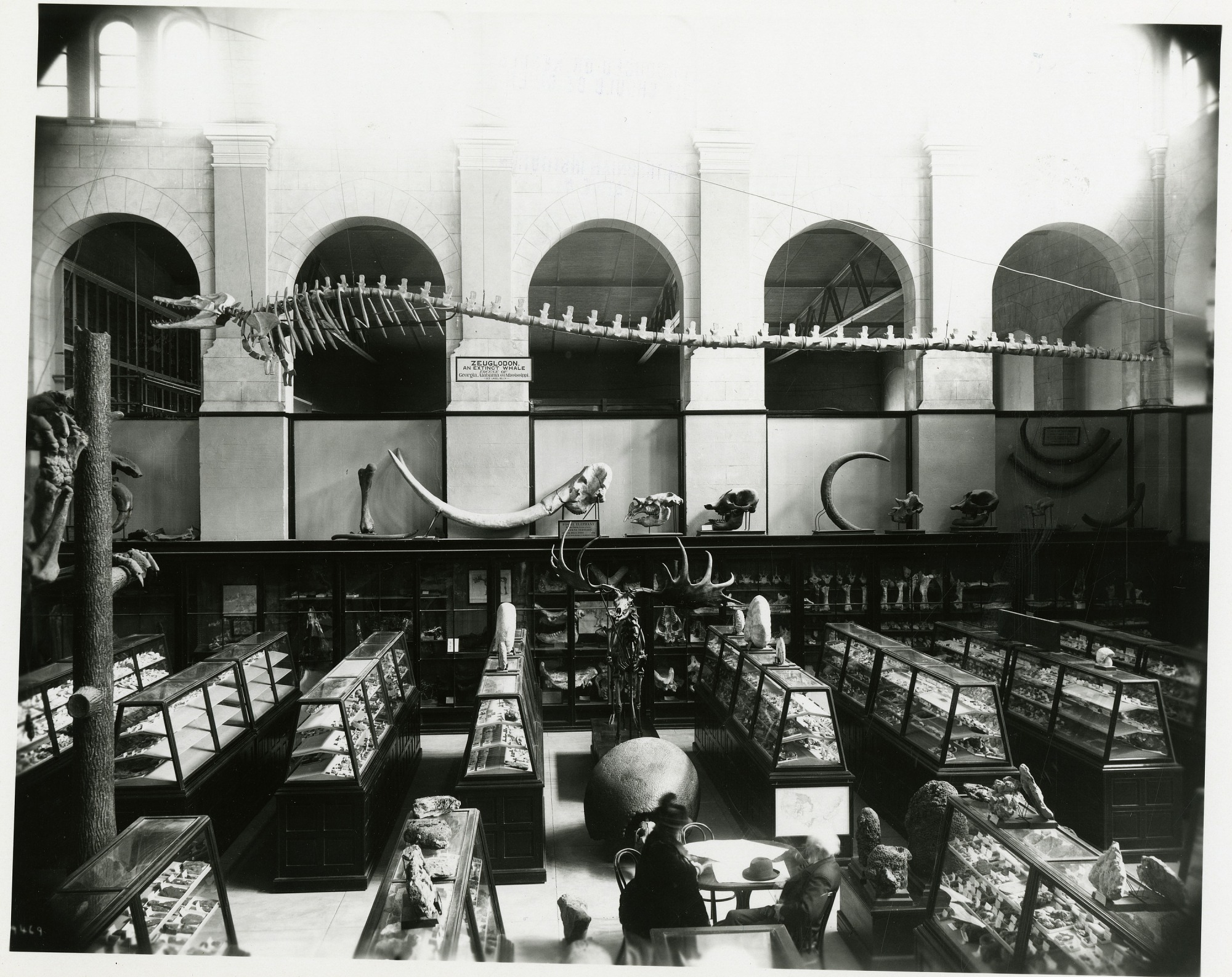 Arts and Industries Building, Paleontology Exhibits