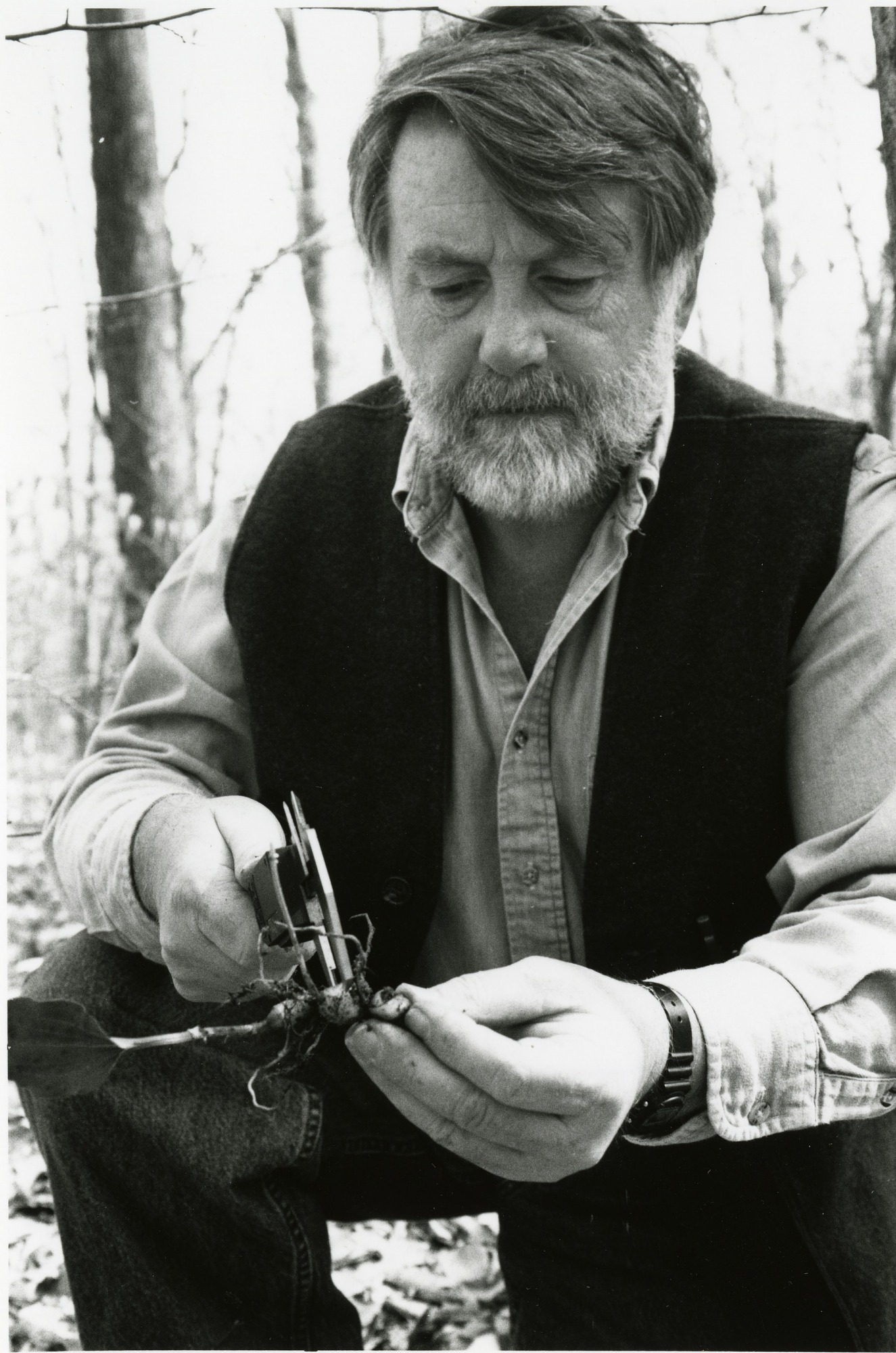 Dennis Whigham