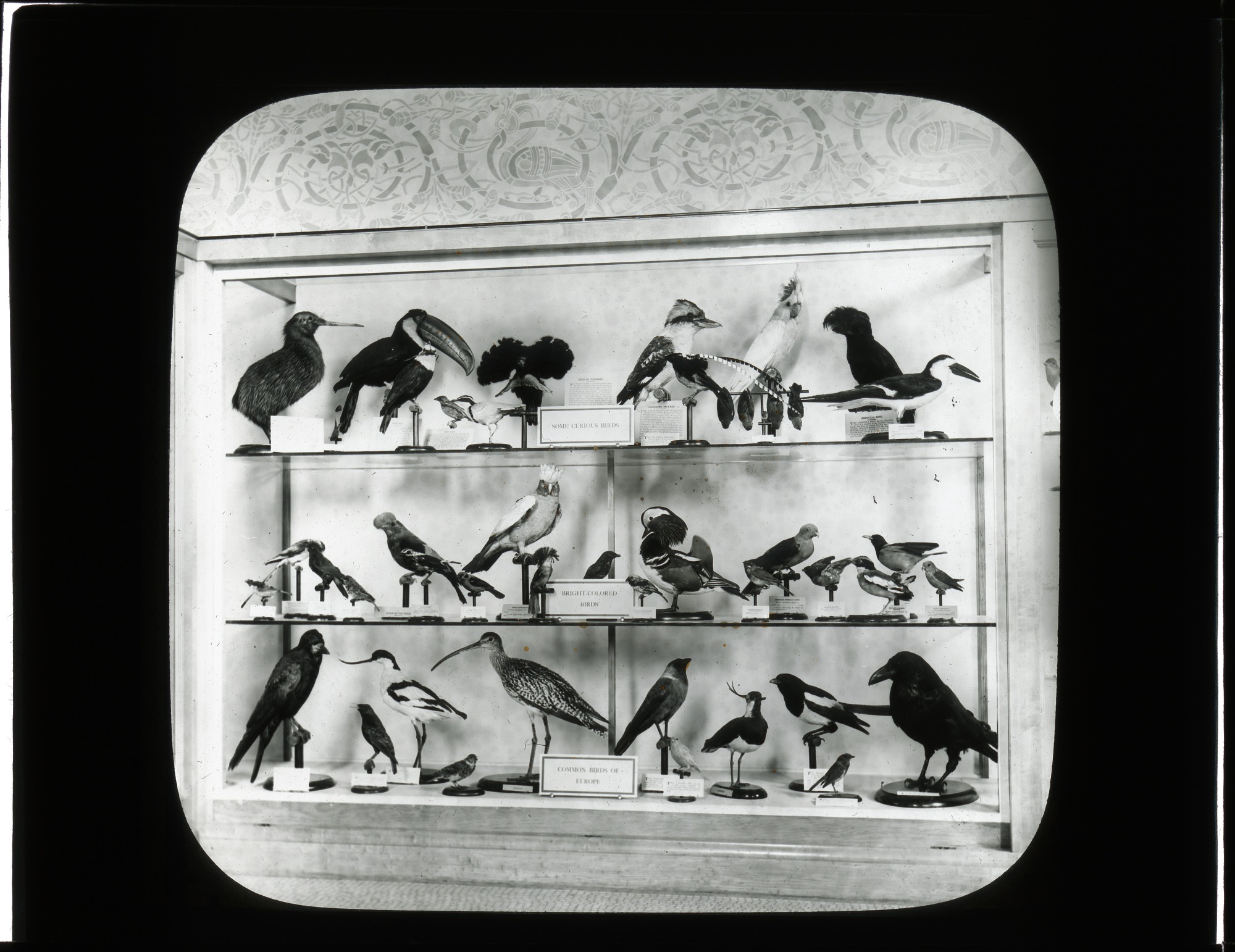 Exhibit Case Showcasing Birds in the Smithsonian Institution Building, or Castle
