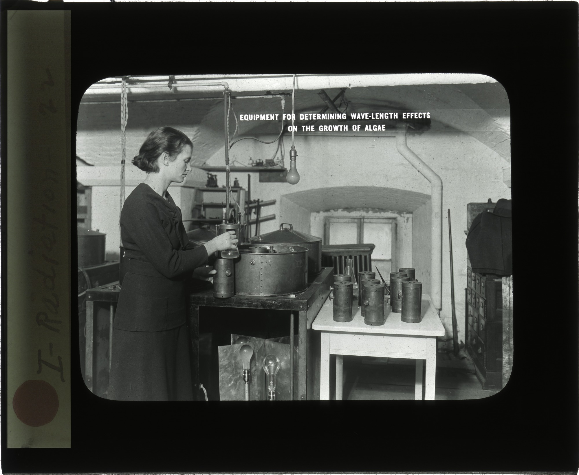 images for Florence E. Meier in the Division of Radiation and Organisms Laboratory