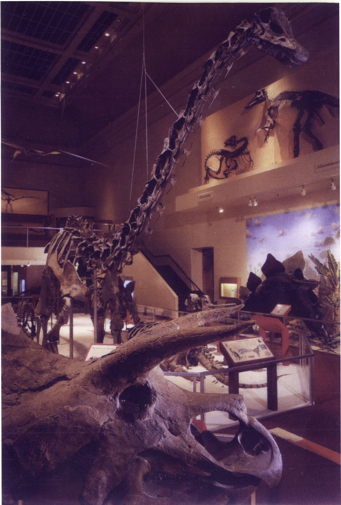 Dinosaur Hall, by Unknown, c. 1990, Smithsonian Archives - History Div, SIA2013-01061.