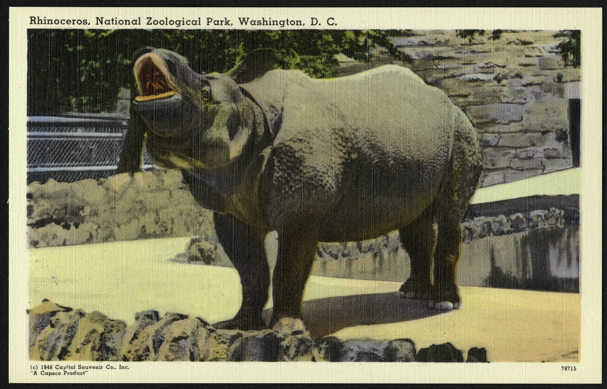 Blank Postcard of a Rhinoceros at the Zoo