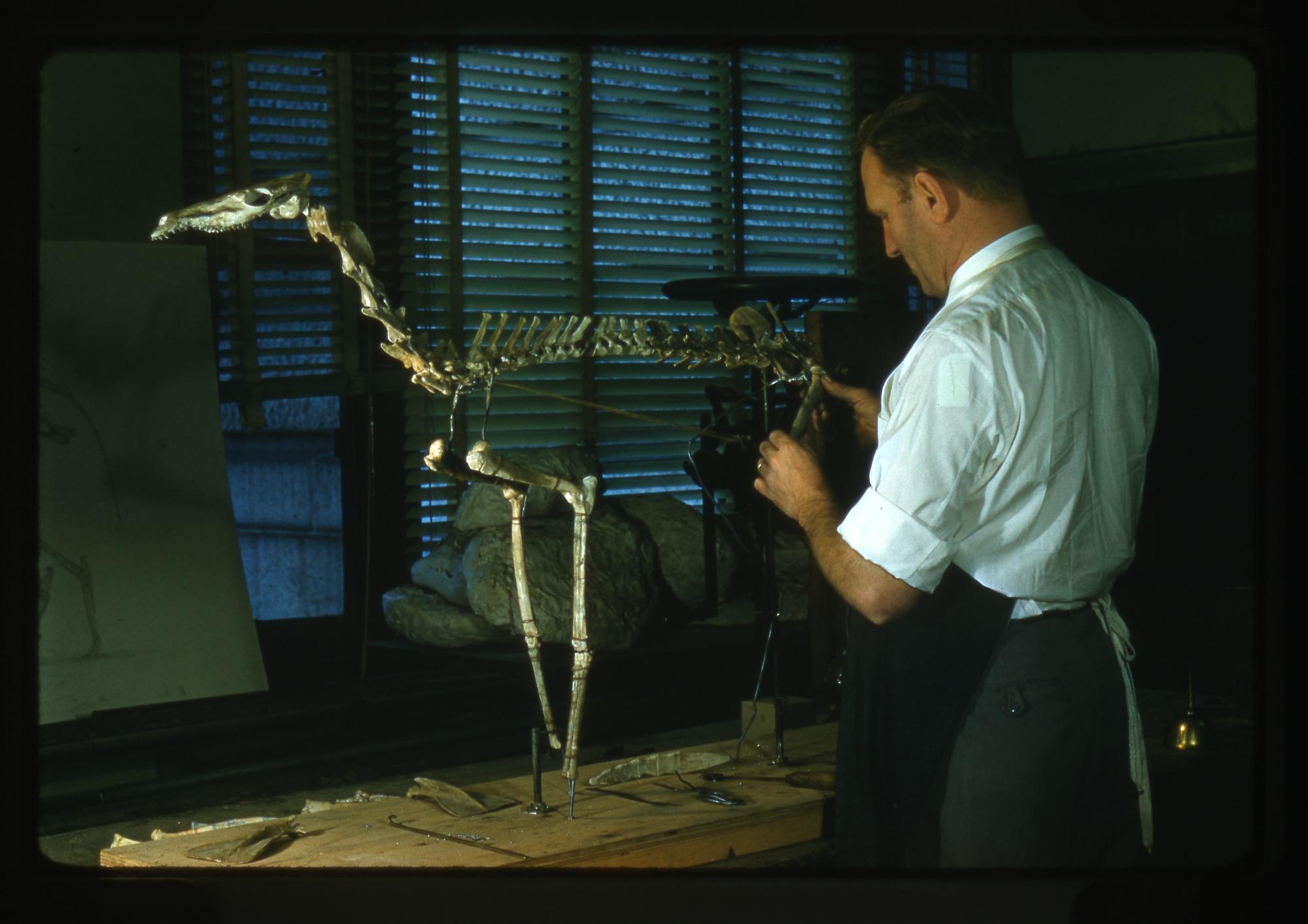 Nick Hotton Working on a Skeleton