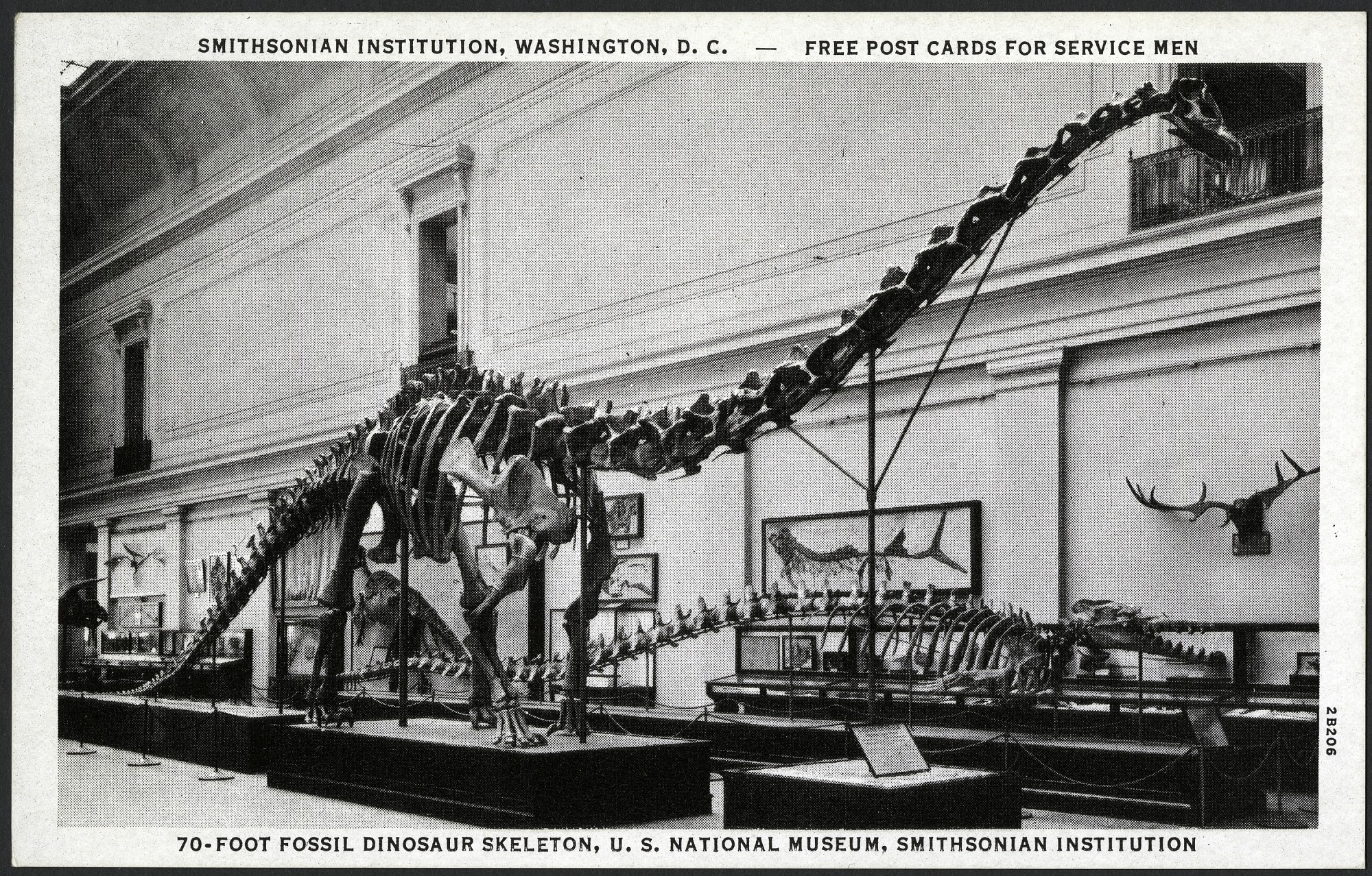 Postcard of a 70-Foot Dinosaur Skeleton