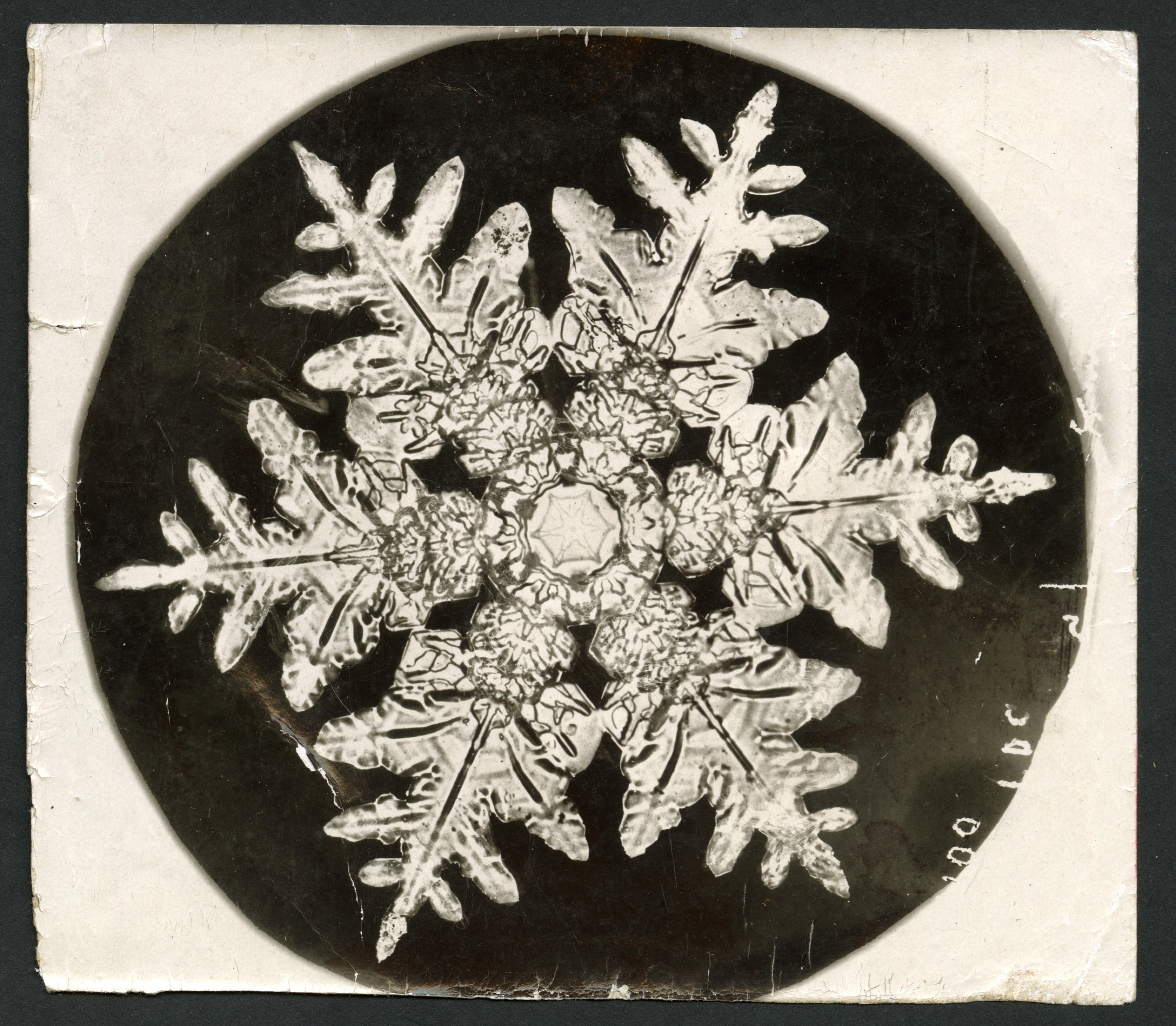 images for Wilson Bentley's Snowflake 990, c. 1890