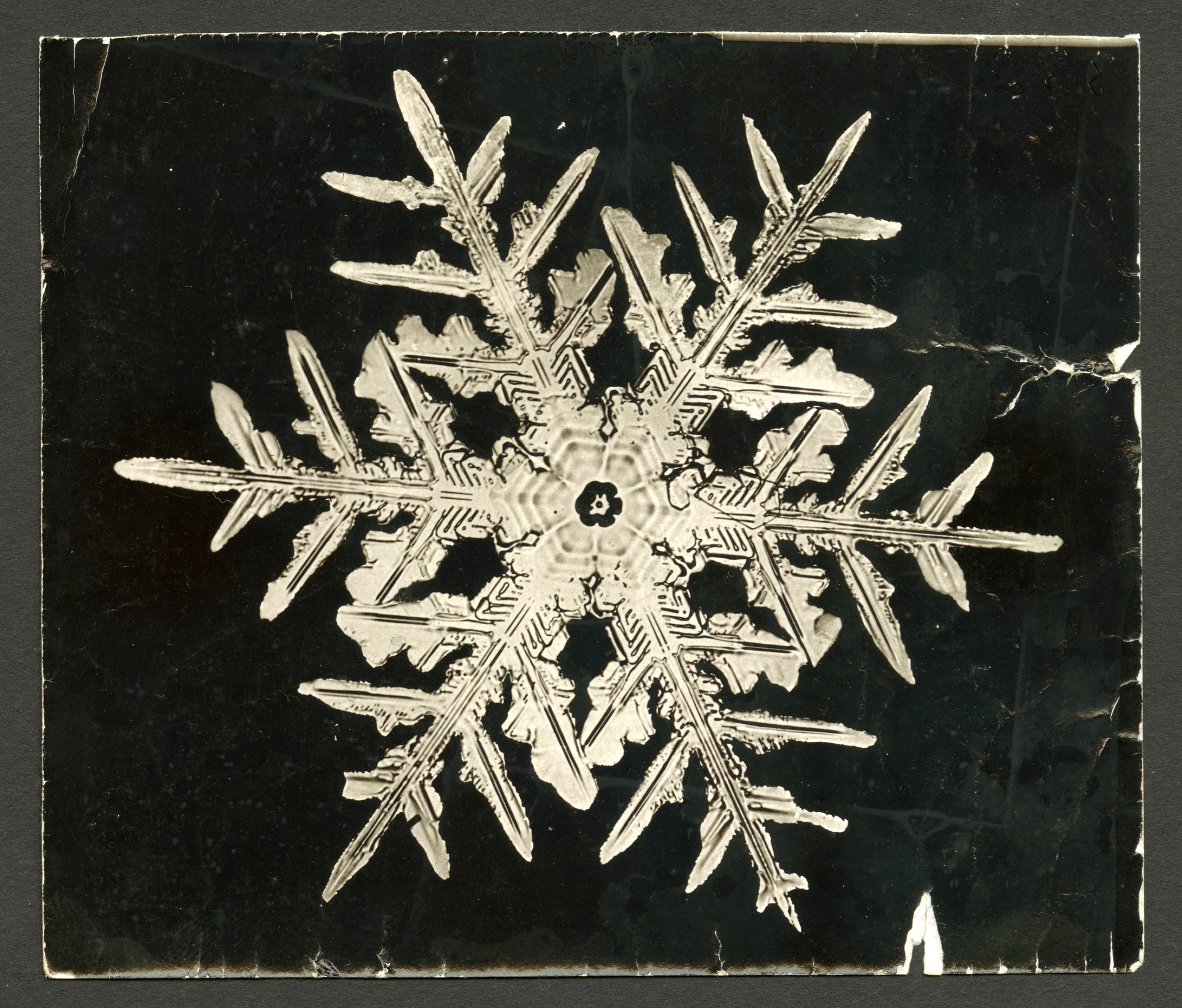 images for Wilson Bentley's Snowflake 332, c. 1890
