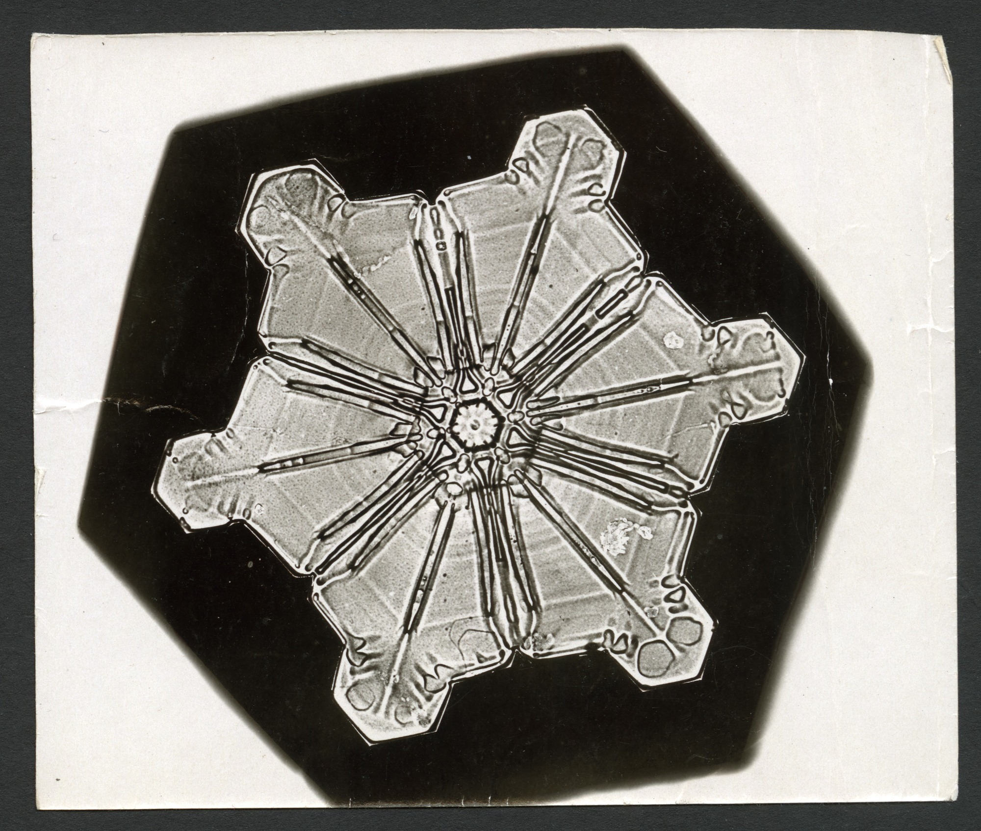 images for Wilson Bentley's Snowflake 976, c. 1890
