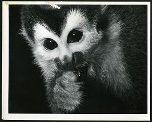 Primates, photos, mostly Barro Colorado Island, Panama (3 of 3)