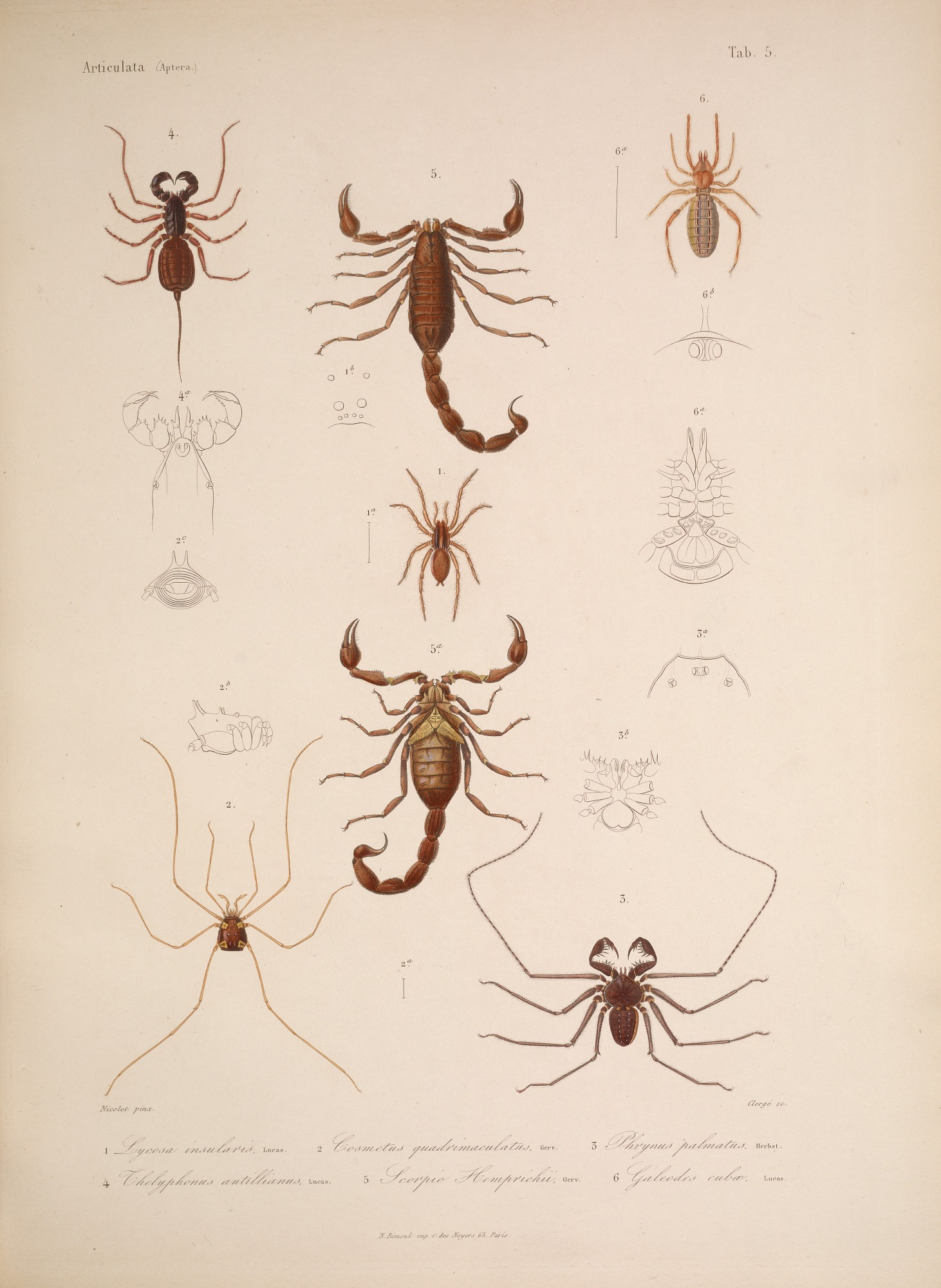 Species and anatomy of Cuban spiders and scorpions.