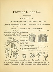 "His works for ""Young People"" helped explain botany to generations of schoolchildren."