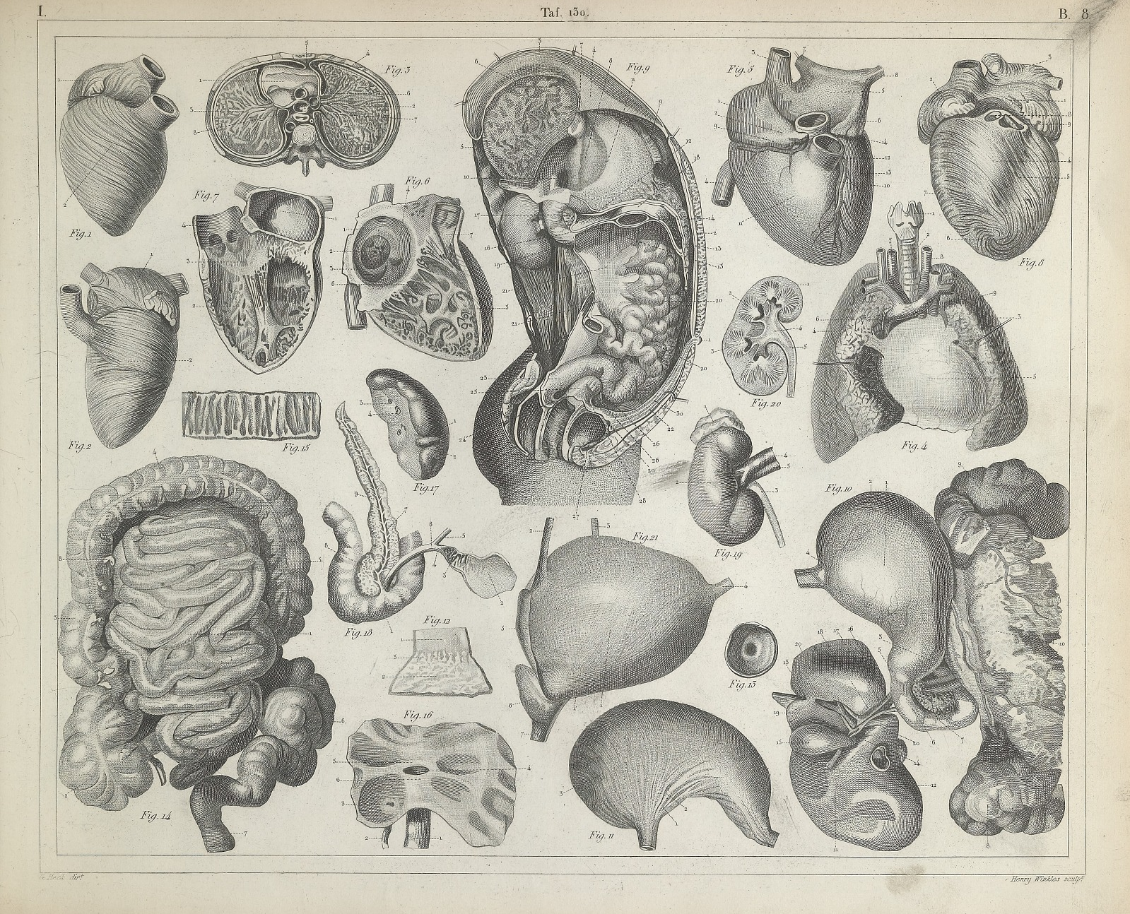 Resources Human Anatomy From Iconographic Encyclopaedia Of