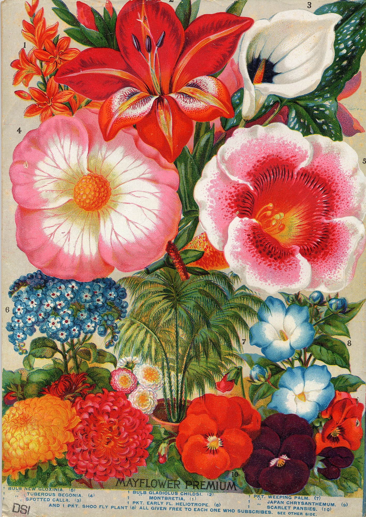 Rare Flowers Vegetables And Fruits John Lewis Childs 1897