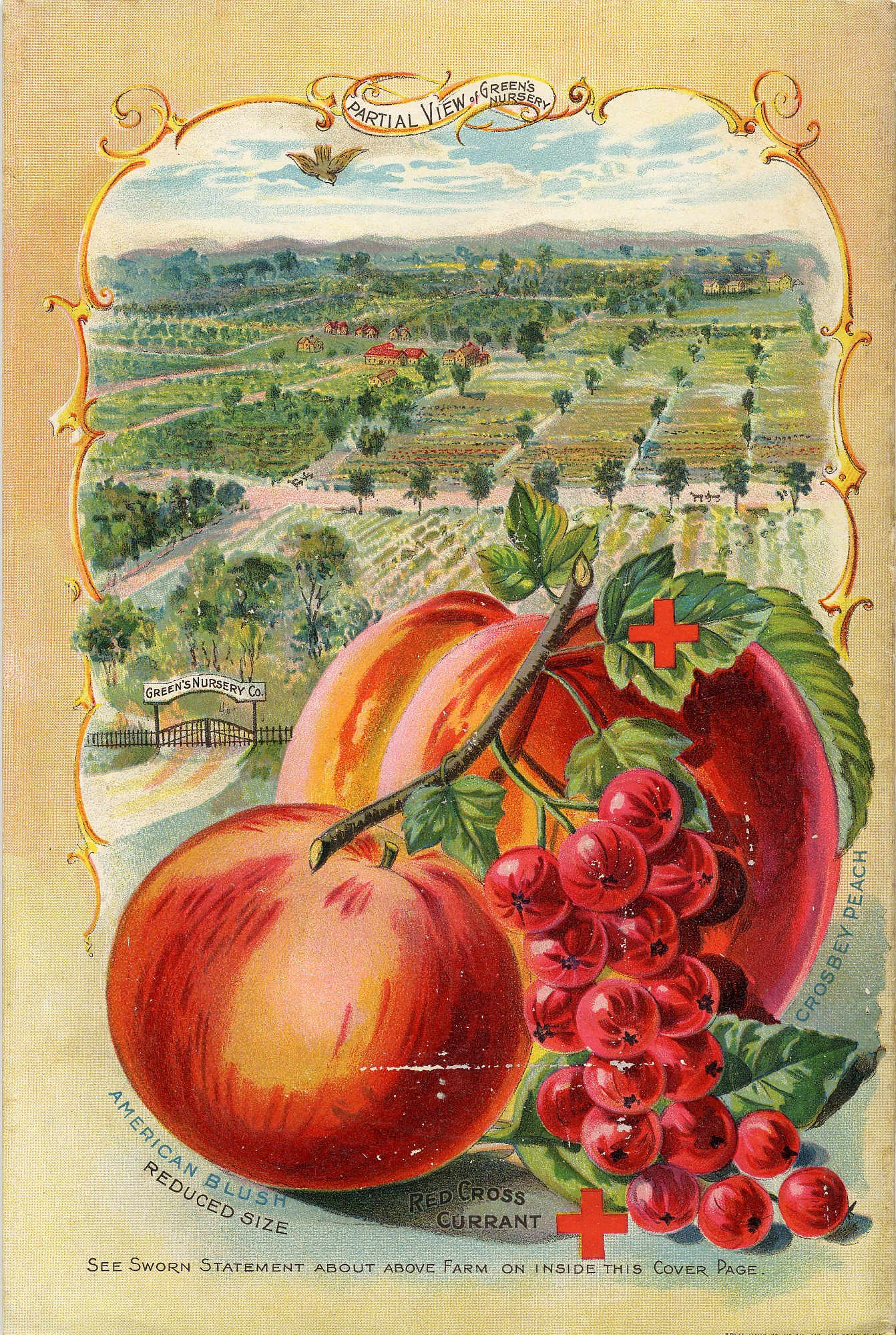 Peaches and currants from Green's nursery co  spring 1896