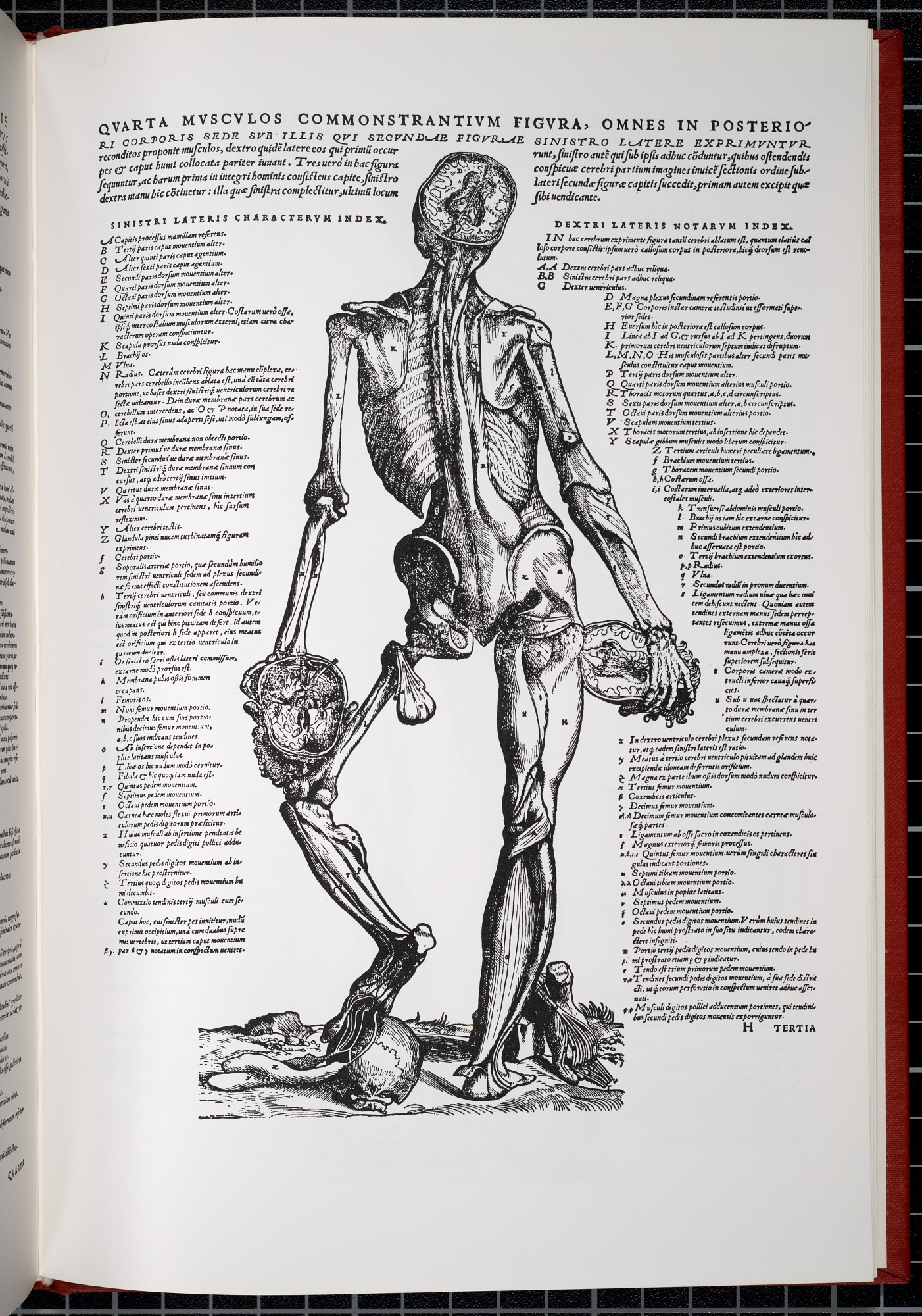 Anatomical Illustration From The Epitome Of Andreas Vesalius