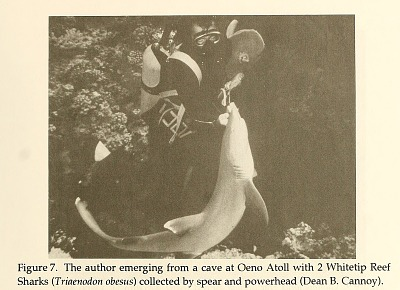 The author emerging from a cave at Oeno Atoll with two Whitetip Reef Sharks from Atoll research bulletin.