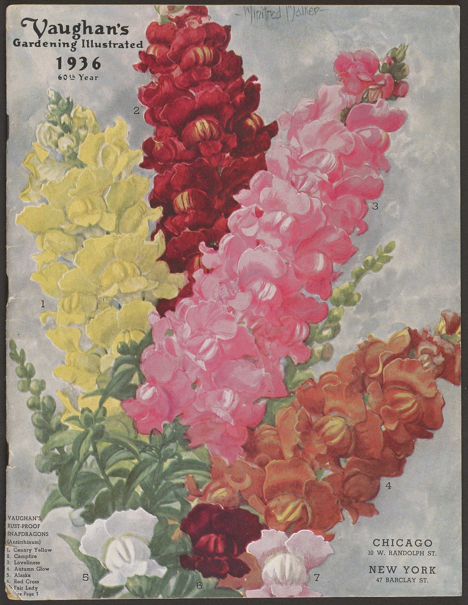 Vaughan's Gardening Illustrated, 1936