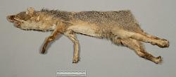 Fox Skin Quiver