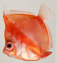 Think Blue: Fish