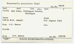 Placobdella parasitica