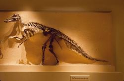 Edmontosaurus annectens (Marsh, 1892)