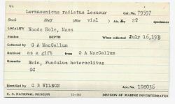 Lernaeenicus radiatus