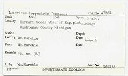 Lumbricus terrestris