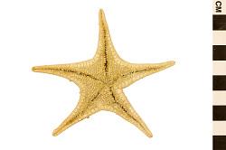 Vermillion Star