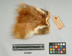 Fox Head Pouch