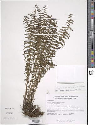 Amauropelta physematioides (Kuhn & C. Chr.) comb. nov., ined 2015