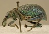 images for Metallic Beetle-thumbnail 2