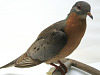 images for Ectopistes migratorius-thumbnail 2