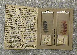 Biomedical Experiment, Microscope Slides