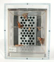 Butterfly Habitat, STS-93