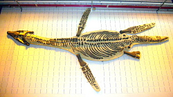 Plesiosaurs and other Large Marine Reptiles